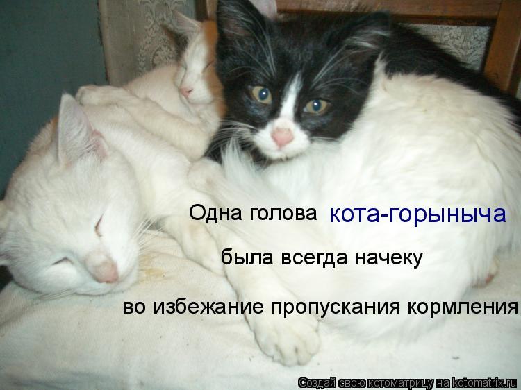 Котоматрица: была всегда начеку Одна голова кота-горыныча во избежание пропускания кормления
