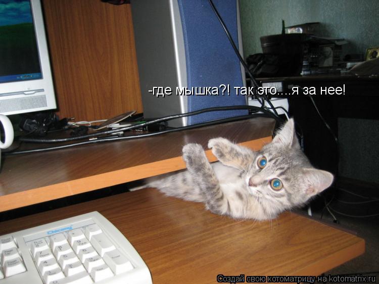Котоматрица: -где мышка?! так это....я за нее!