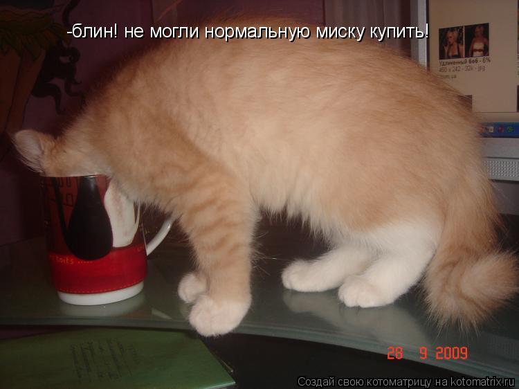 Котоматрица: -блин! не могли нормальную миску купить!