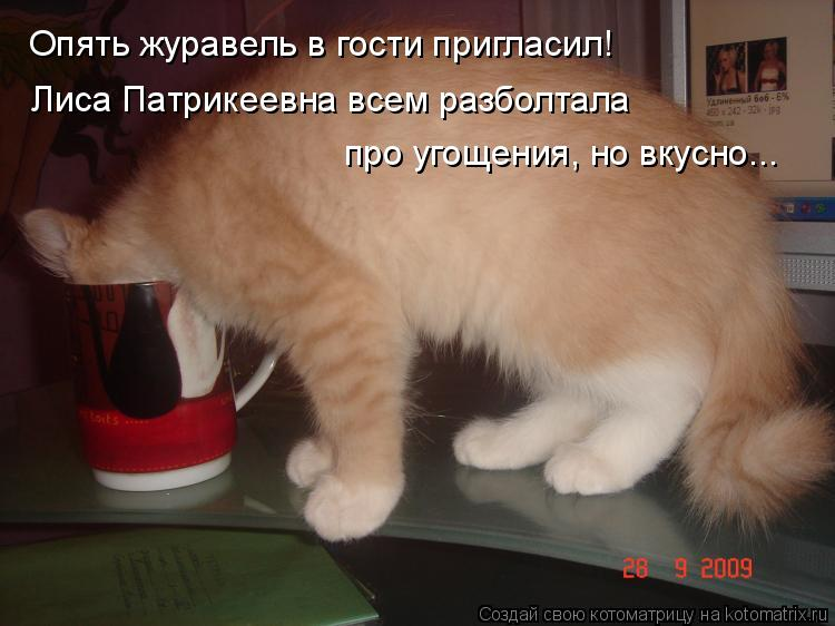 Котоматрица: Опять журавель в гости пригласил! Лиса Патрикеевна всем разболтала  про угощения, но вкусно...