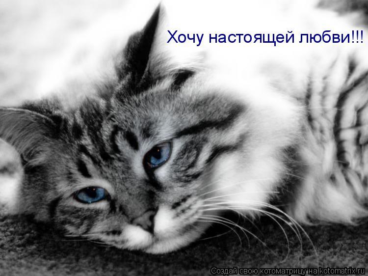 Котоматрица: Хочу настоящей любви!!!