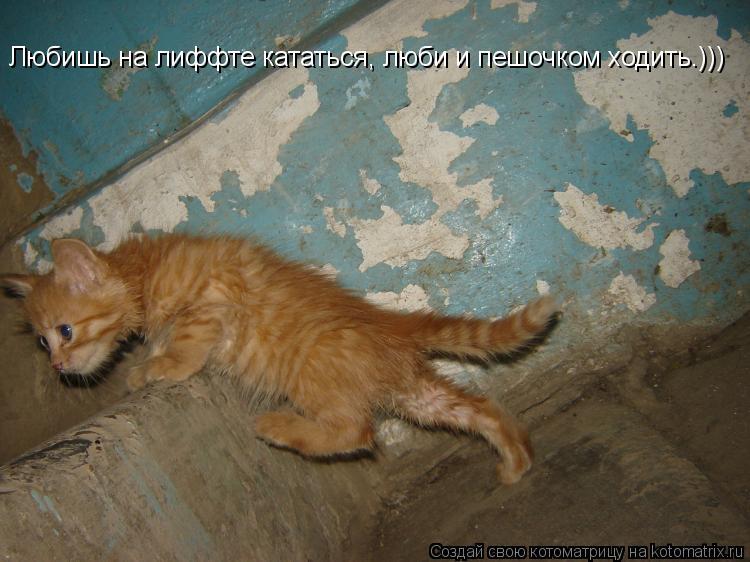 Котоматрица: Любишь на лиффте кататься, люби и пешочком ходить.)))