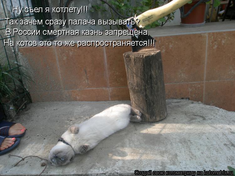Котоматрица: Ну съел я котлету!!! Так зачем сразу палача вызывать? В России смертная казнь запрещена,  На котов это то же распространяется!!!