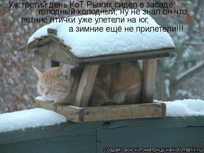 Котоматрица: Уж третий день КоТ Рыжик сидел в засаде, а зимние ещё не прилетели!!!   голодный холодный, ну не знал он что,  летние птички уже улетели на юг,