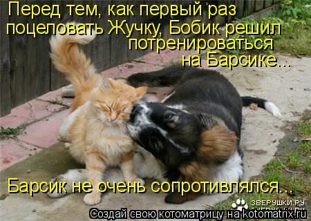 Котоматрица: Перед тем, как первый раз поцеловать Жучку, Бобик решил потренироваться на Барсике... Барсик не очень сопротивлялся...