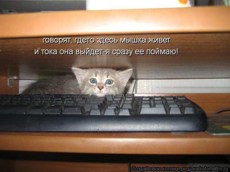 Котоматрица: говорят, гдето здесь мышка живет и тока она выйдет-я сразу ее поймаю!