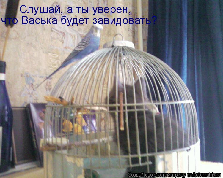 Котоматрица: Слушай, а ты уверен, что Васька будет завидовать?