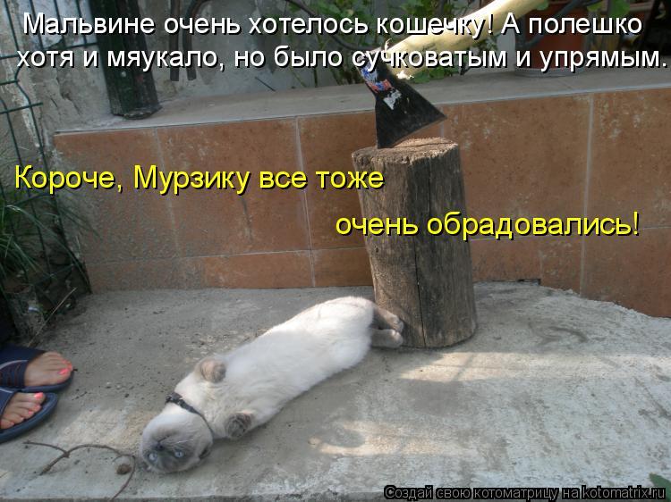 Котоматрица: Мальвине очень хотелось кошечку! А полешко хотя и мяукало, но было сучковатым и упрямым.  Короче, Мурзику все тоже  очень обрадовались!