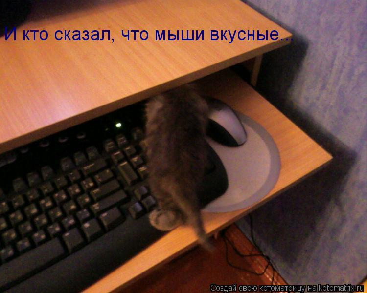 Котоматрица: И кто сказал, что мыши вкусные...