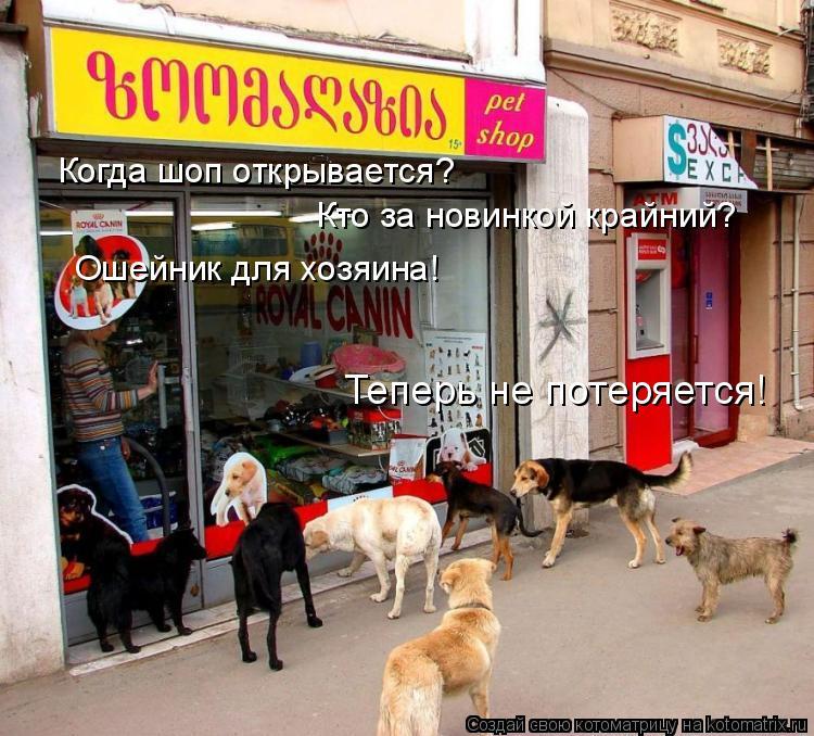 Котоматрица: Когда шоп открывается? Кто за новинкой крайний? Ошейник для хозяина! Теперь не потеряется!