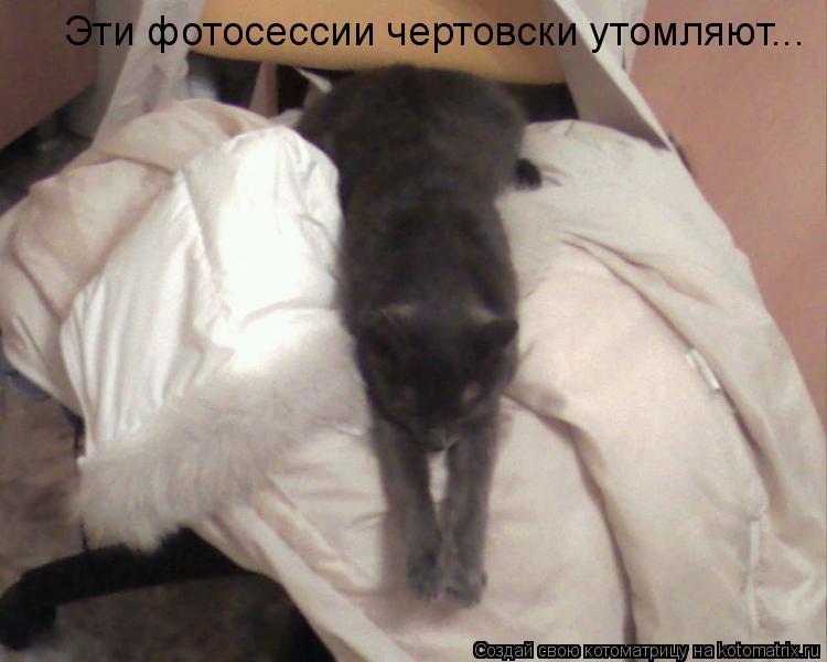 Котоматрица: Эти фотосессии чертовски утомляют...