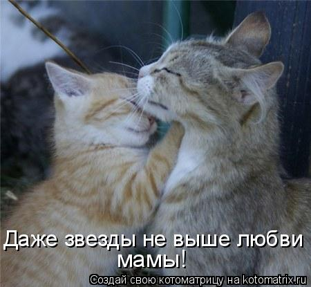 Котоматрица: Даже звезды не выше любви мамы!