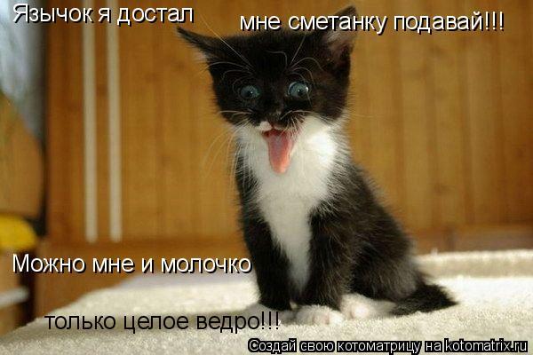 Котоматрица: Язычок я достал мне сметанку подавай!!! Можно мне и молочко только целое ведро!!!