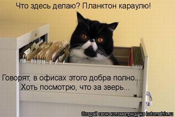 Котоматрица: Что здесь делаю? Планктон караулю! Говорят, в офисах этого добра полно... Хоть посмотрю, что за зверь...