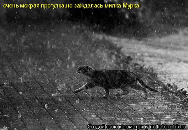Котоматрица: очень мокрая прогулка,но заждалась милка Мурка!