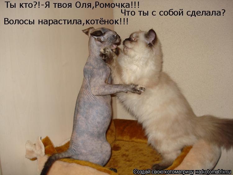 Котоматрица: Ты кто?!-Я твоя Оля,Ромочка!!! Что ты с собой сделала? Волосы нарастила,котёнок!!!