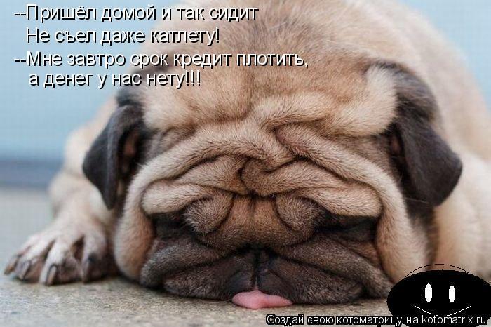 Котоматрица: --Пришёл домой и так сидит  Не съел даже катлету!  --Мне завтро срок кредит плотить, а денег у нас нету!!!