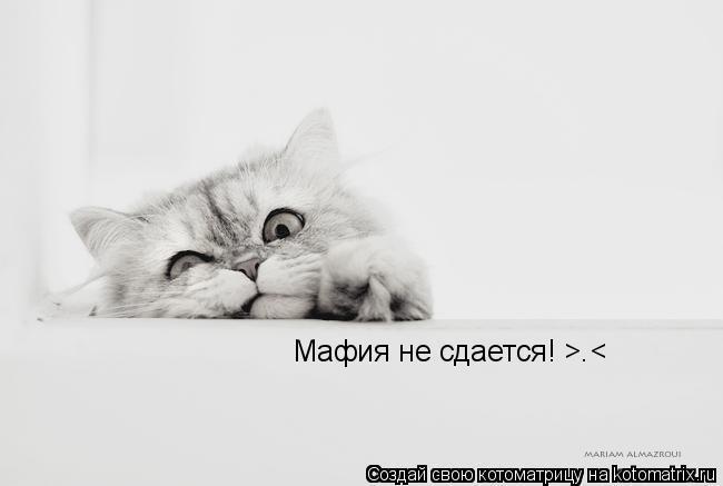 Котоматрица: Мафия не сдается! >.<