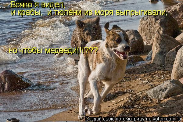 Котоматрица: Всяко я видел, и крабы,  и тюлени из моря выпрыгивали,  но чтобы медведи!!!???