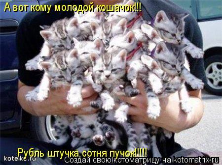 Котоматрица: А вот кому молодой кошачок!!! Рубль штучка,сотня пучок!!!!!
