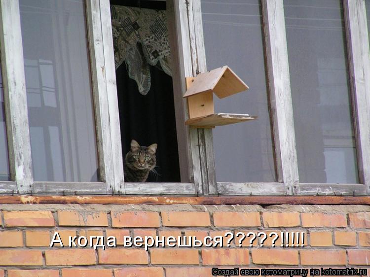 Котоматрица: А когда вернешься?????!!!!!