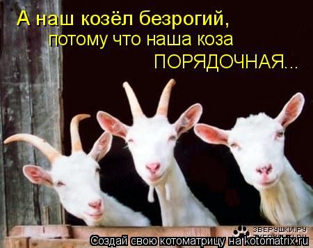 Котоматрица: А наш козёл безрогий, потому что наша коза  ПОРЯДОЧНАЯ...