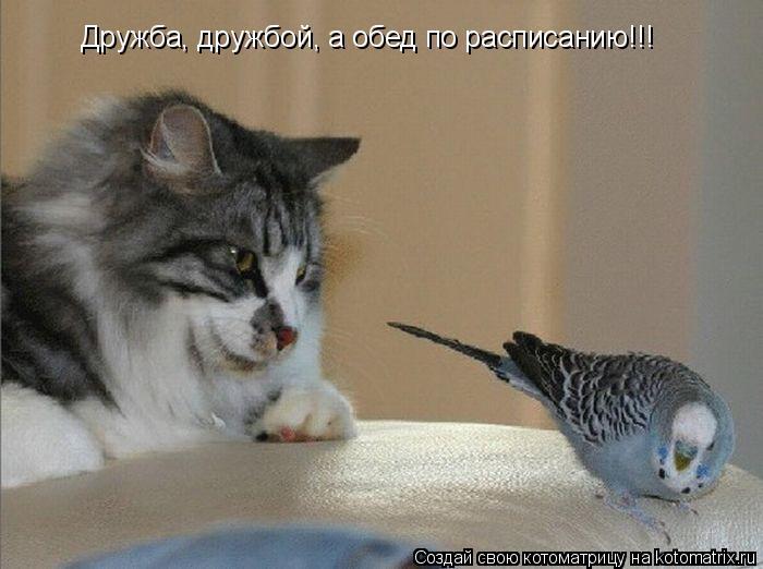 Котоматрица: Дружба, дружбой, а обед по расписанию!!!