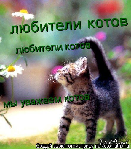 Котоматрица: любители котов любители котов мы любим котов мы уважаем котов