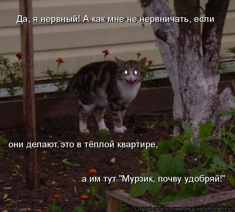 """Котоматрица: Да, я нервный! А как мне не нервничать, если они делают это в тёплой квартире,  а им тут """"Мурзик, почву удобряй!"""""""
