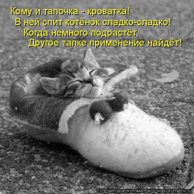 Котоматрица: Кому и тапочка - кроватка! В ней спит котёнок сладко-сладко! Когда немного подрастёт, Другое тапке применение найдёт!