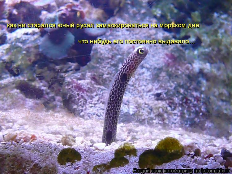 Котоматрица: как ни старался юный русал замаскироваться на морском дне что нибудь его постоянно выдавало...