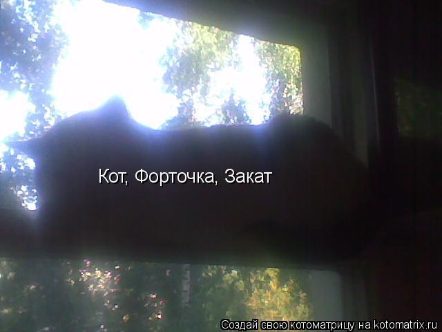 Котоматрица: Кот, Форточка, Закат