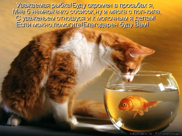 Котоматрица: Уважаемая рыбка!Буду скромен в просьбах я, Мне б немножечко сосисок,ну и мяска с пол-кила, С уваженьем отношуся и к молочным я делам! Уважаем