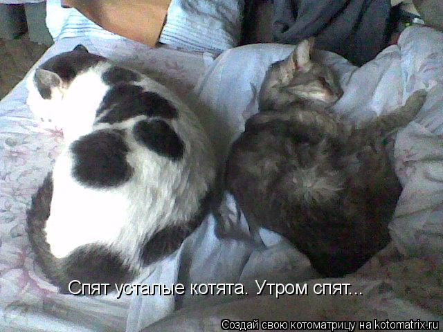 Котоматрица: Спят усталые котята. Утром спят...