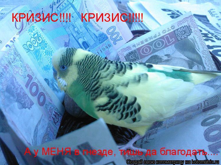 Котоматрица: КРИЗИС!!!!   КРИЗИС!!!!! А у МЕНЯ в гнезде, тишь да благодать....