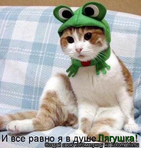 Котоматрица: Лягушка! И все равно я в душе