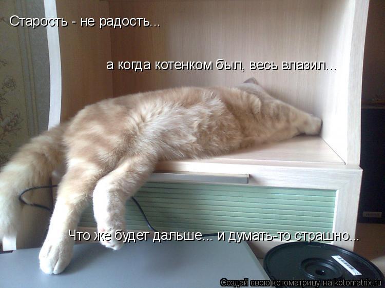 Котоматрица: Старость - не радость... а когда котенком был, весь влазил... Что же будет дальше... и думать-то страшно...