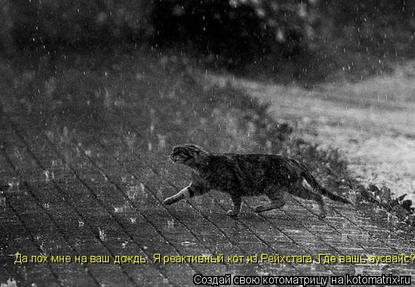 Котоматрица: Да пох мне на ваш дождь. Я реактивный кот из Рейхстага. Где вашь аусвайс?