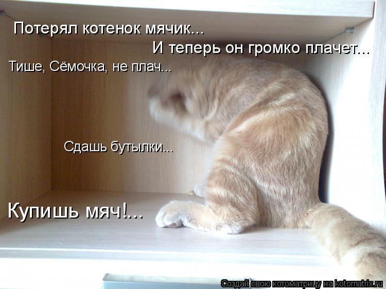 Котоматрица: Потерял котенок мячик... И теперь он громко плачет... Тише, Сёмочка, не плач... Сдашь бутылки... Купишь мяч!...