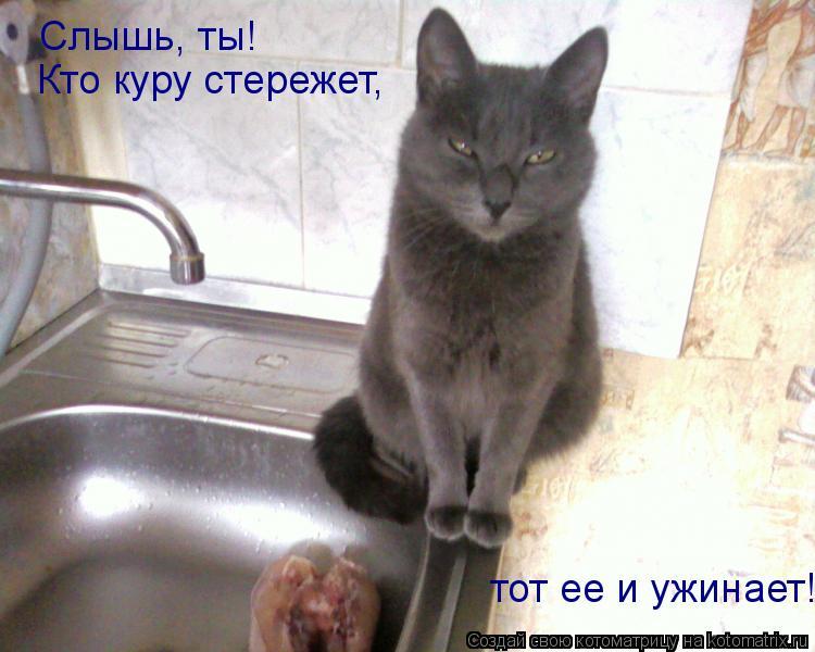 Котоматрица: Слышь, ты! Кто куру стережет, тот ее и ужинает!