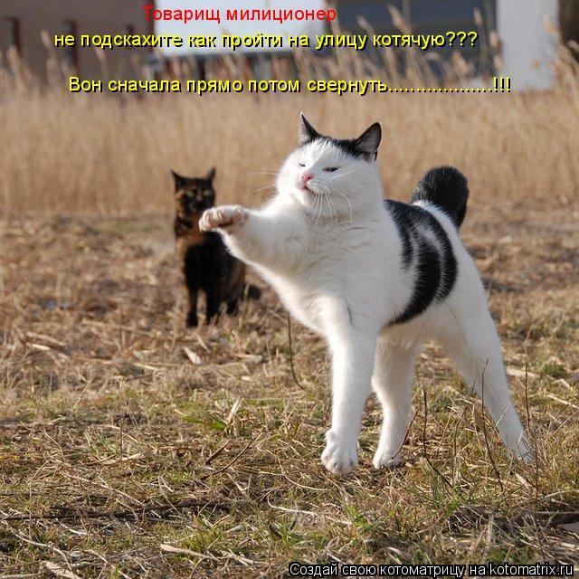 Котоматрица: не подскахите как пройти на улицу котячую??? Вон сначала прямо потом свернуть...................!!! Товарищ милиционер