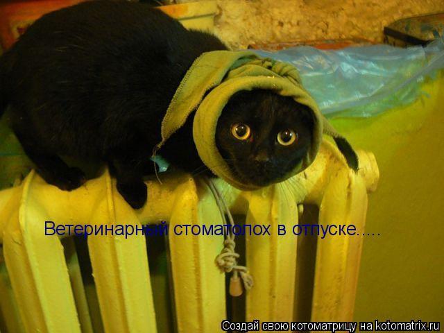 Котоматрица: Ветеринарный стоматолох в отпуске.....