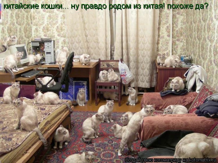 Котоматрица: китайские кошки... ну правдо родом из китая! похоже да?