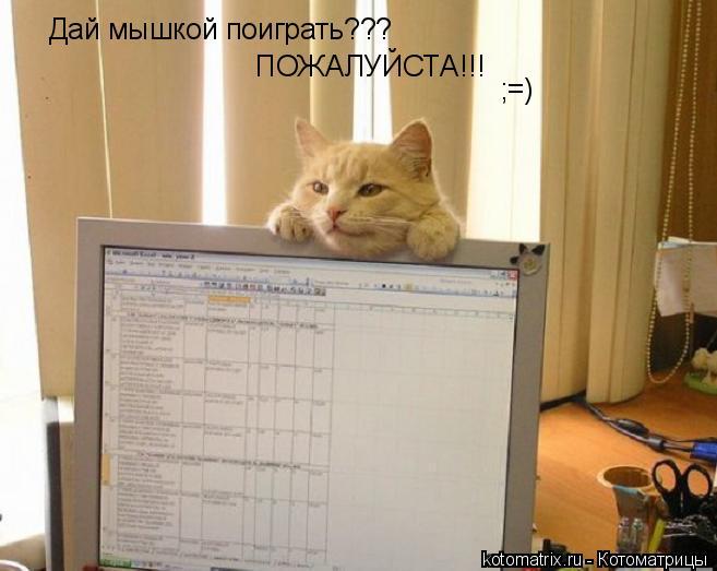 Котоматрица: Дай мышкой поиграть??? ПОЖАЛУЙСТА!!! ;=)