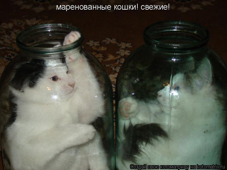 Котоматрица: маренованные кошки! свежие!