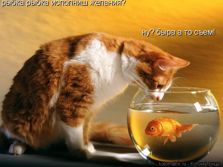 Котоматрица: рыбка рыбка исполниш желания? ну? быра а то съем!