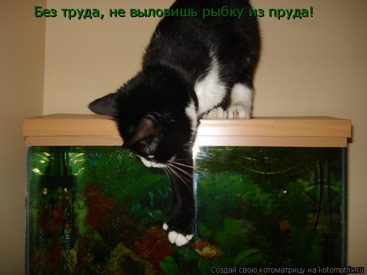 Котоматрица: Без труда, не выловишь рыбку из пруда!