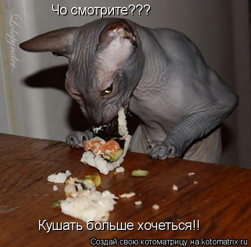 Котоматрица: Чо смотрите??? Кушать больше хочеться!!