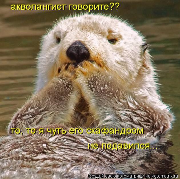 Котоматрица: акволангист говорите?? не подавился... то, то я чуть его скафандром