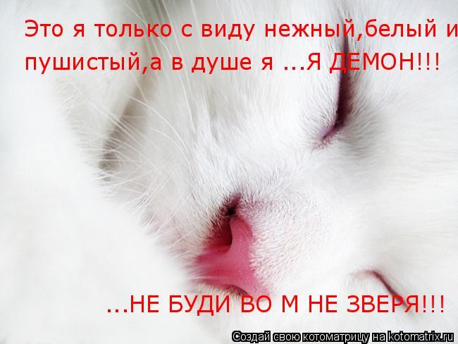 Котоматрица: Это я только с виду нежный,белый и пушистый,а в душе... Это я только с виду нежный,белый и пушистый,а в душе...Я ДЕМОН!!! пушистый,а в душе я ...Я ДЕ